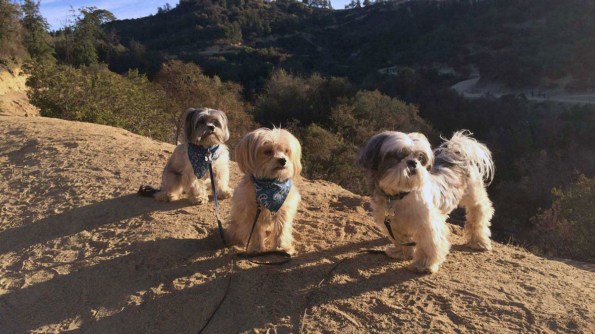 Griffith Park Trio